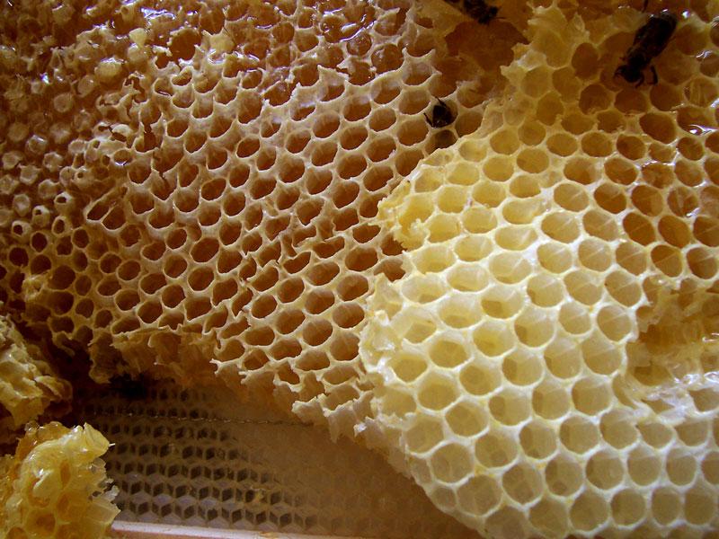 Honey Facial Sanctuary Santa Fe